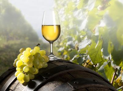 Le raisin, la vigne : s'initier à l'oenologie lors de cours ou découvrir le temps d'un week-end